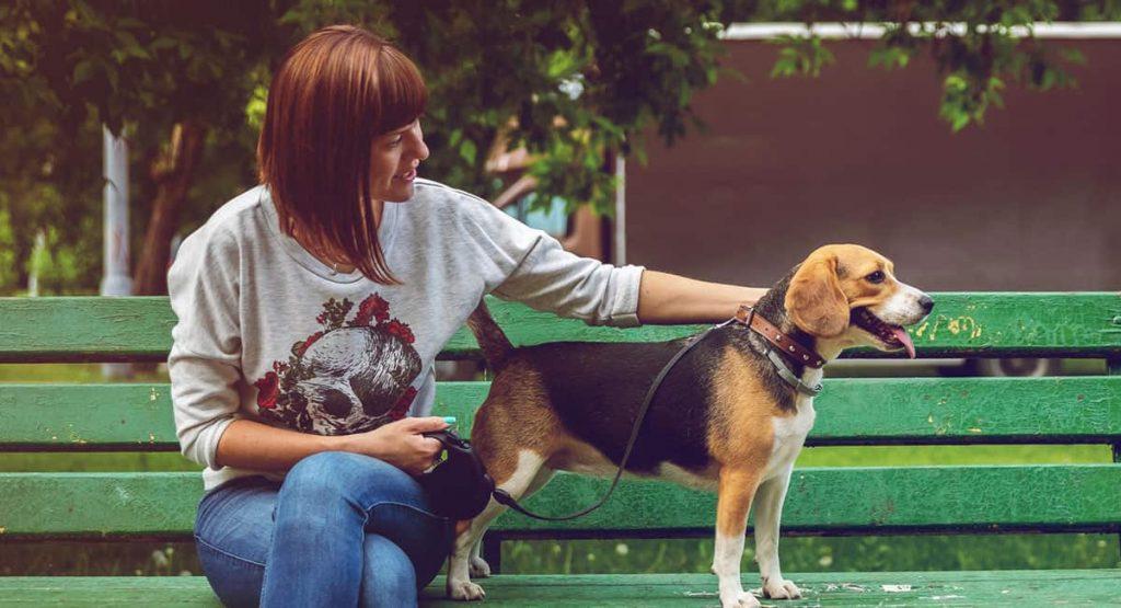 Windsor, Newmarket Dog Walker